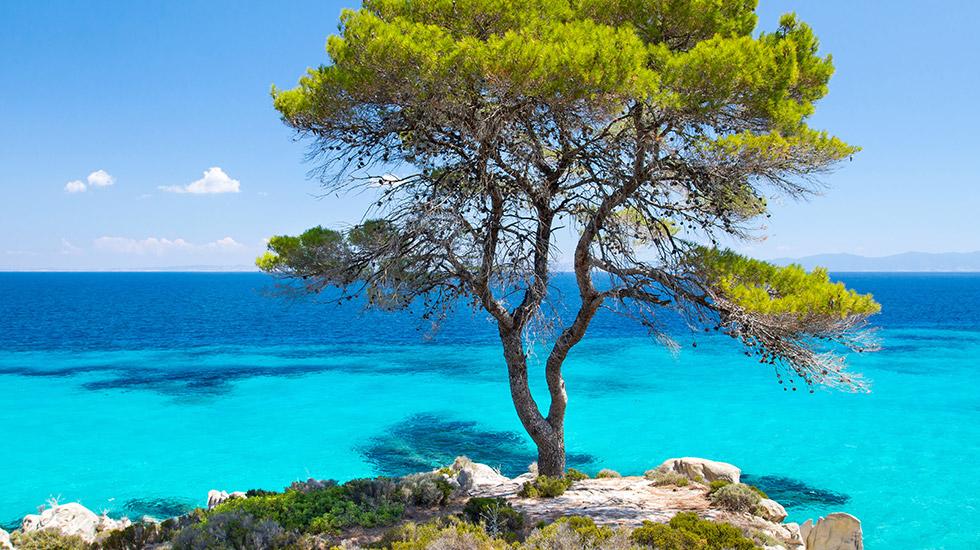 pella beach grecotel premium resort chalkidiki